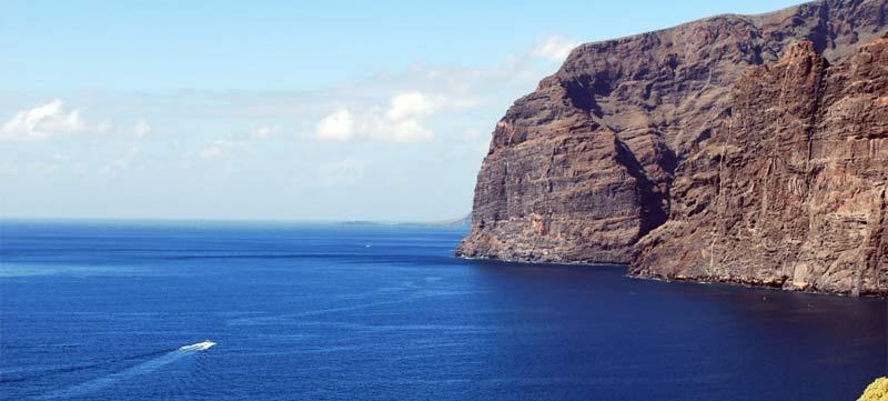3 especies marinas que puedes ver en Tenerife