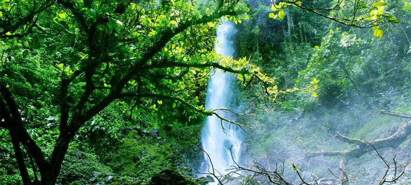 Las mejores cascadas para visitar en La Palma